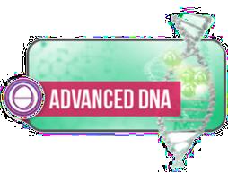 Aufbau DNA Seminar