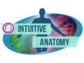 thetahealing-intuitive-anatomy.png
