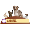 thetahealing-animals.png